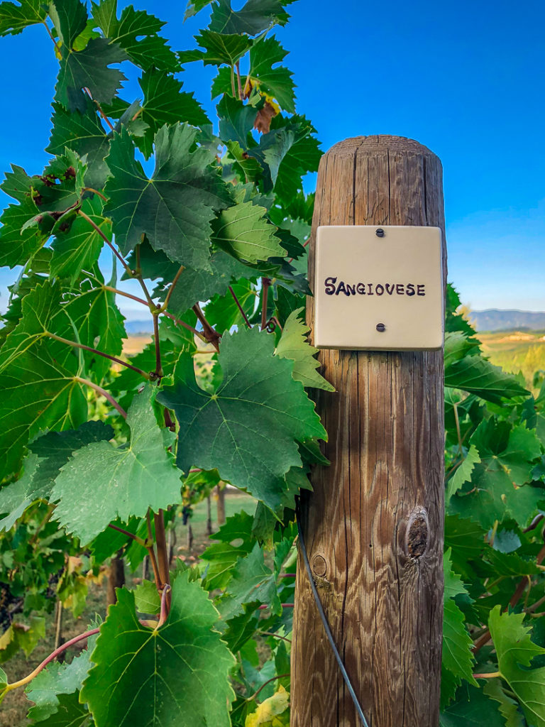 Italian Vineyard Sangiovese